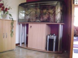 Foto 2 240 Liter Aquarium
