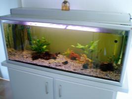 240 l Aquarium mit Besatz und Zubehör