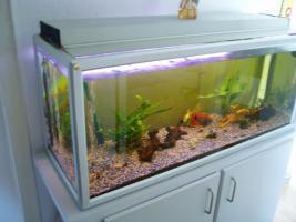 Foto 2 240 l Aquarium mit Besatz und Zubehör