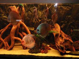 Foto 2 240L Aquarium 120x40x50 Diskusbecken KOMPLETT hochwertig!