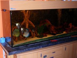 Foto 6 240L Aquarium 120x40x50 Diskusbecken KOMPLETT hochwertig!