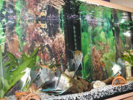 Foto 2 240L Aquarium komplett mit Unterschrank