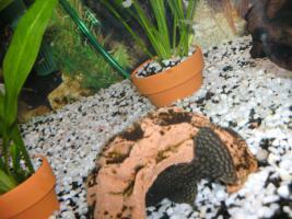 Foto 3 240L Aquarium komplett mit Unterschrank