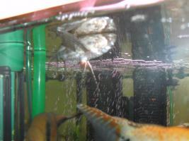 Foto 4 240L Aquarium komplett mit Unterschrank