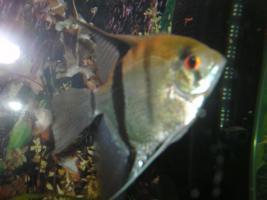 Foto 5 240L Aquarium komplett mit Unterschrank