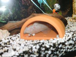 Foto 6 240L Aquarium komplett mit Unterschrank