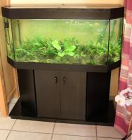 250l Aquarium + Technik, viel Zubehör und Fischen zu verkaufen