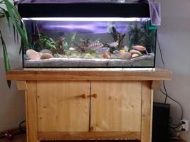 260 liter Aquarium zu Verkaufen mit alles an Zubehör und Fischen