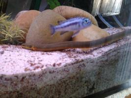 Foto 3 260 liter Aquarium zu Verkaufen mit alles an Zubehör und Fischen