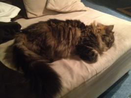 Foto 3 2Traum Katzen suchen ein liebe volles zu Hause
