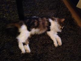 Foto 4 2Traum Katzen suchen ein liebe volles zu Hause