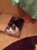 Foto 6 2Traum Katzen suchen ein liebe volles zu Hause