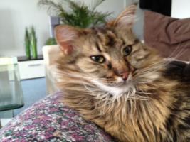 Foto 7 2Traum Katzen suchen ein liebe volles zu Hause