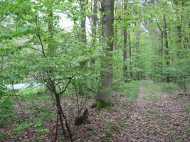 2,2894 ha Wald + 4574m2 Wiese/Weideland