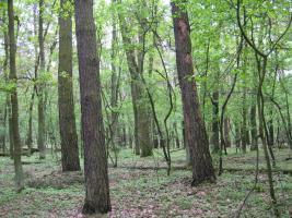 Foto 2 2,2894 ha Wald + 4574m2 Wiese/Weideland