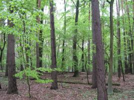 Foto 3 2,2894 ha Wald + 4574m2 Wiese/Weideland