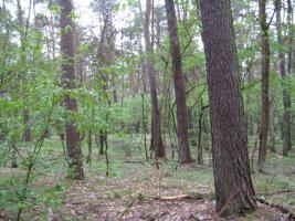 Foto 4 2,2894 ha Wald + 4574m2 Wiese/Weideland