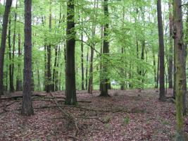 Foto 5 2,2894 ha Wald + 4574m2 Wiese/Weideland