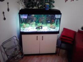 2oo l aquarium komplet mit fische