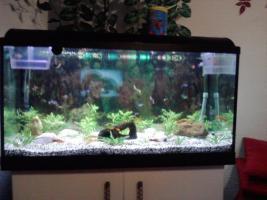 Foto 2 2oo l aquarium komplet mit fische