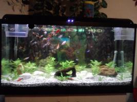 Foto 3 2oo l aquarium komplet mit fische