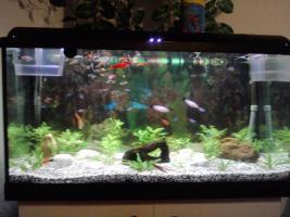 Foto 4 2oo l aquarium komplet mit fische