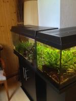 2x 120 Liter Süsswasseraquarien komplett mit Inhalt zu verkaufen