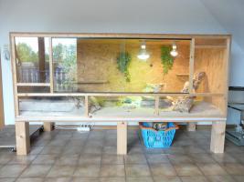 Foto 6 3 Bartagamen + Terrarium