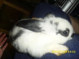 3 Kaninchenbabys