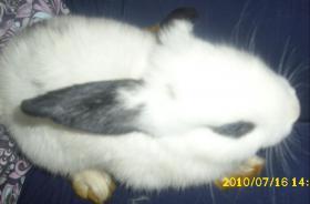 Foto 2 3 Kaninchenbabys