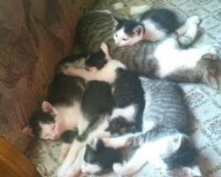 Foto 6 3 Katzenbabys suchen ein liebes Zuhause