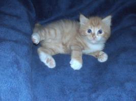 3 Kitten suchen 250€