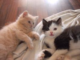 3 Kitten suchen alles nur noch Katerchen