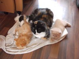 Foto 3 3 Kitten suchen alles nur noch Katerchen