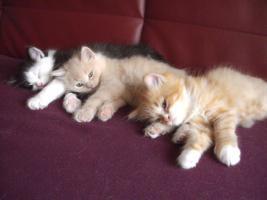 Foto 4 3 Kitten suchen alles nur noch Katerchen