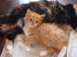 Foto 5 3 Kitten suchen alles nur noch Katerchen