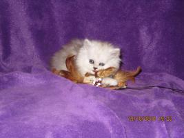 Foto 3 3 Perser Baby