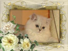 Foto 5 3 Perser Baby