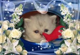 Foto 6 3 Perser Baby