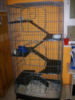 Foto 7 3 Süße Ratten Mädels suchen ein neues Zuhause