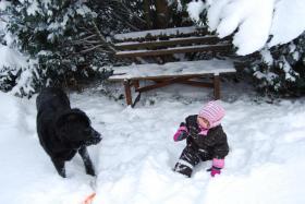 Foto 2 3 jähriger Neufundländer-Husky-Mix sucht neues liebevolle zu Hause