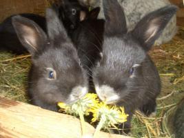 3 junge Kaninchen (geb.10.März.2010) dringend abzugeben