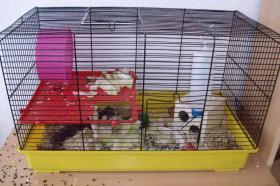 Foto 2 3 kleine süße Hamsterkinder mit Mama und Käfig zu verschenken