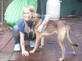 Foto 2 3 mittelgroße Mischlingshunde suchen Zuhause