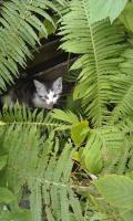 Foto 2 3 s��e Katzenbabys abzugeben!