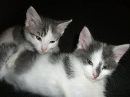 Foto 7 3 s��e Katzenbabys abzugeben!