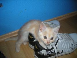 3 süße Katzenbabys dringend abzugeben!