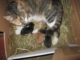 Foto 3 3 süße Katzenbabys in gute Hände abzugeben