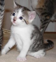 3 süße Katzenbabys suchen ein neues Zuhause