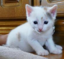 Foto 3 3 süße Katzenbabys suchen ein neues Zuhause